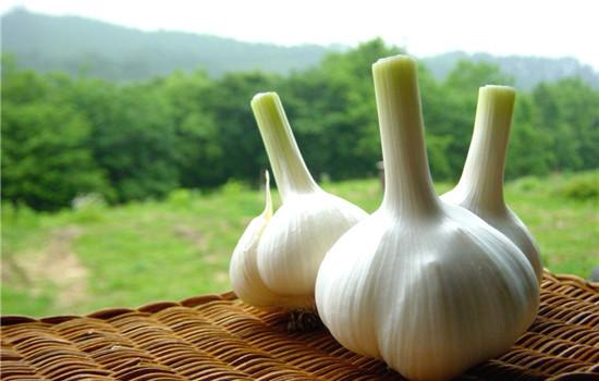 best Garlic extract oil- xuhuang
